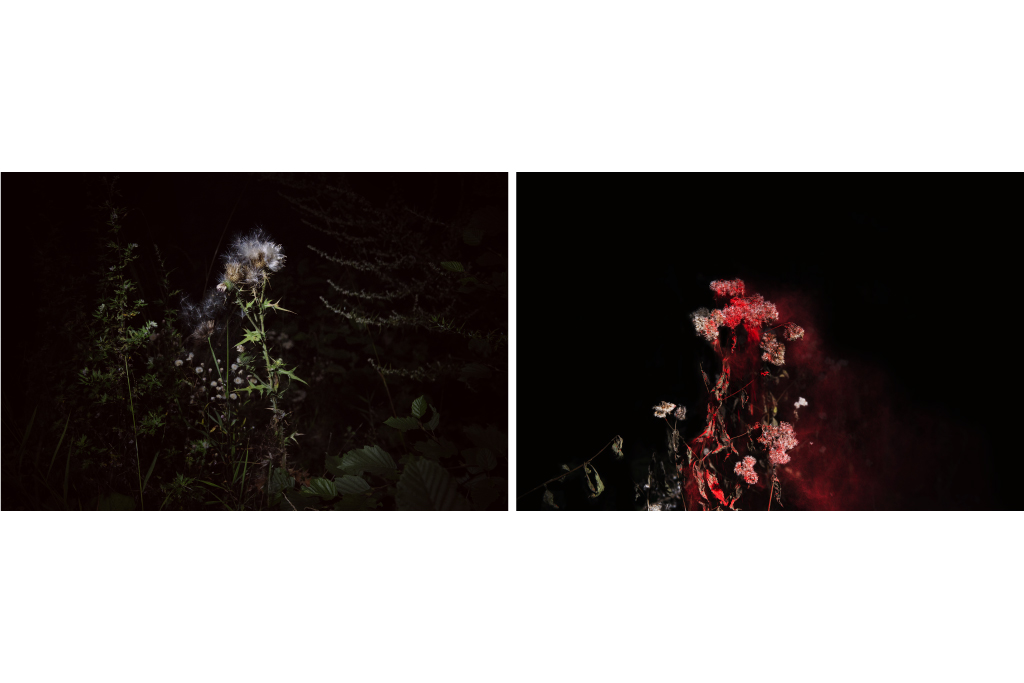 Flowering (sx) e Night Blooming (dx), 2016, 20x30cm, prestigious baritated paper 340 gsm, exemplary 1 in edition of 5 (in sale as a diptych - €300)